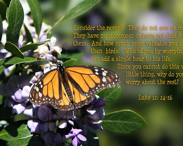 Scripture Poster featuring the photograph Butterfly With Scripture by Linda Phelps
