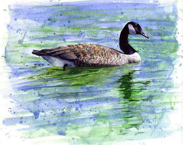 Bird Poster featuring the painting Canada Goose by John D Benson