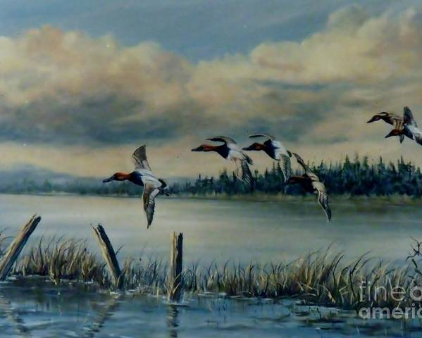 Flock Of Canvasback Ducks Poster featuring the painting Canvasbacks Over Lake Earl by Lynne Parker