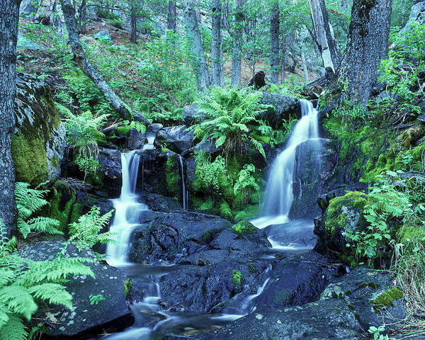 Landscape Poster featuring the photograph Cascade Creek And Ferns by Joe Palermo