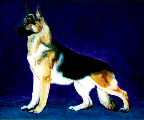 Dog Portrait Poster featuring the painting Champion by Stan Hamilton