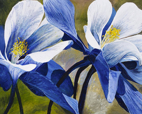Flower Poster featuring the painting Colorado Columbines by Aaron Spong