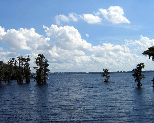 Scenic Lake Photograph Poster featuring the photograph Cypress Cove by Frederic Kohli