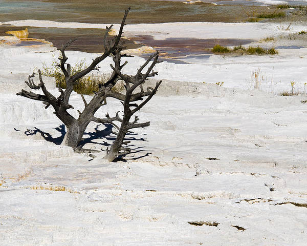 Yellowstone Poster featuring the photograph Desolate by Chad Davis
