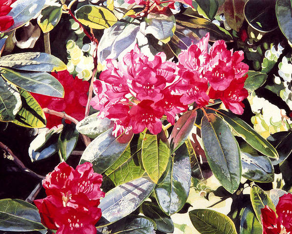 Rhododendrons Poster featuring the painting Dreaming Of April by David Lloyd Glover