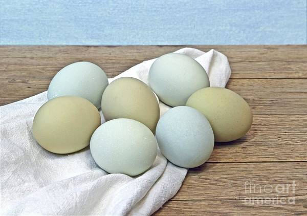 Eggs Poster featuring the photograph Exotic Colored Chicken Eggs by Pattie Calfy