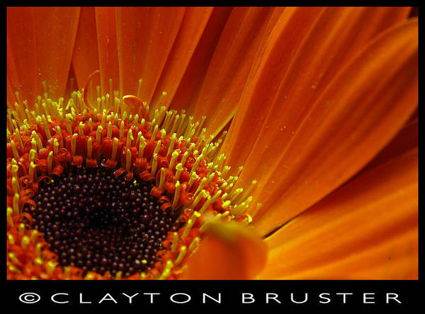 Clay Poster featuring the photograph Floral by Clayton Bruster