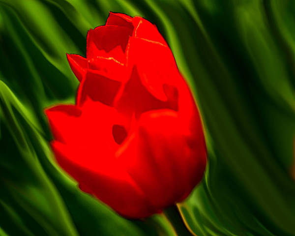 Tulip Poster featuring the digital art Fusion by Lyle Huisken