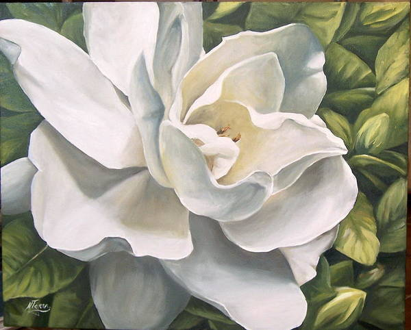 Flower Poster featuring the painting Gardenia by Natalia Tejera
