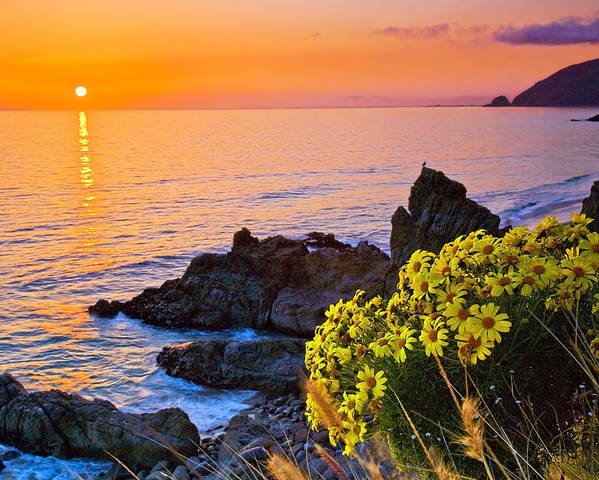 Beaches Poster featuring the photograph Giant Coreopsis Sunset by Greg Clure