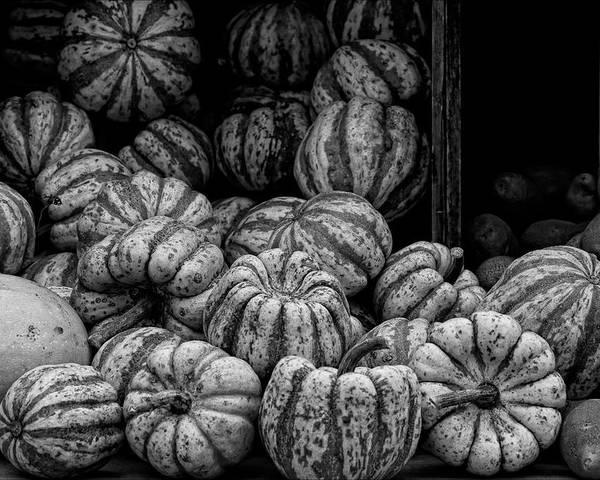 Gourds Poster featuring the photograph Gourds by Robert Ullmann