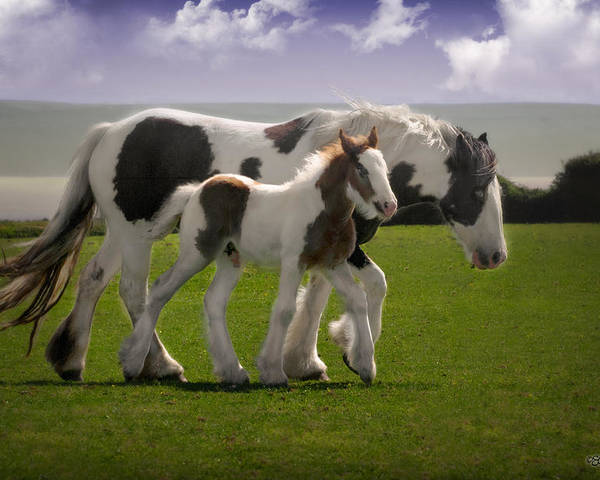 Gypsy Vanner Poster featuring the photograph Gypsy Mare And Foal by Elizabeth Sescilla