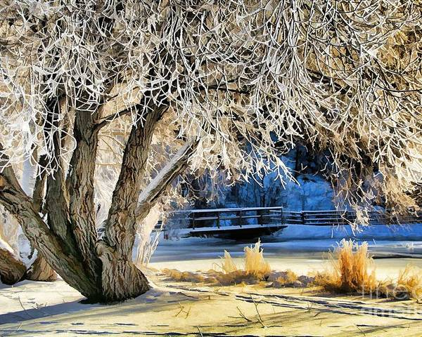 Abstract Poster featuring the photograph Hoar Frost by Roland Stanke
