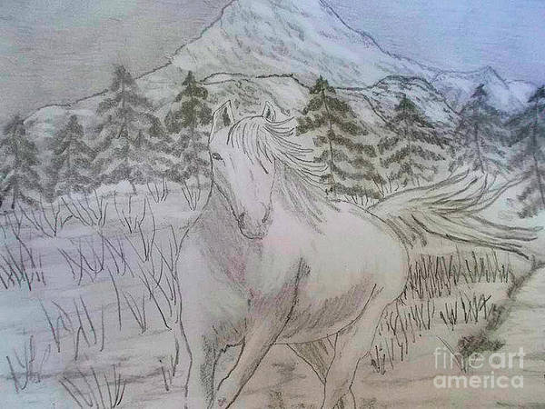Animals Poster featuring the drawing Horse by Sherri Gill