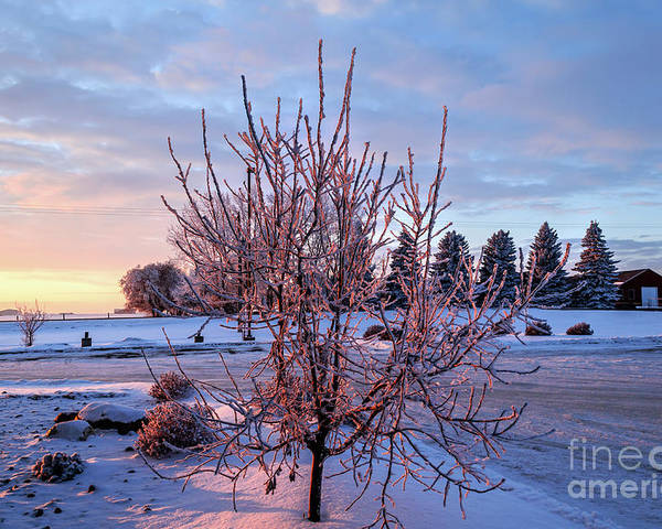 Winter Poster featuring the photograph Icy Tree At Sunset by Viktor Birkus