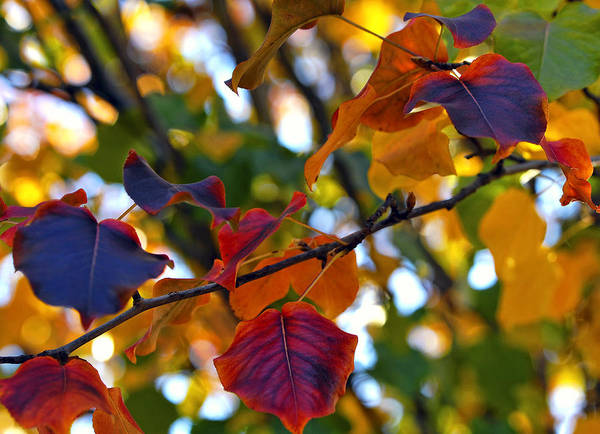 Leaf Poster featuring the photograph Leaves Of Autumn by Stephen Anderson