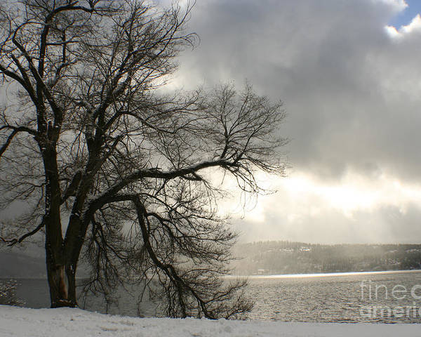 Lake Poster featuring the photograph Luminescence by Idaho Scenic Images Linda Lantzy