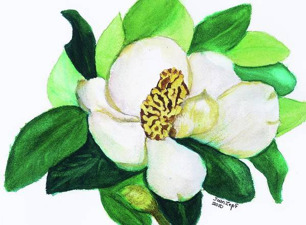Magnolia Poster featuring the painting Magnolia Iv by Joan Zepf
