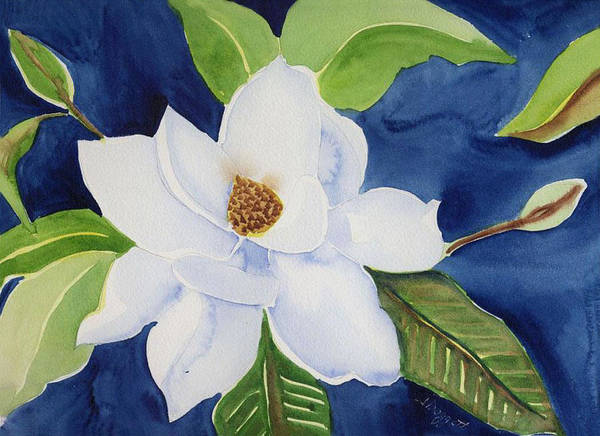 Magnolia Poster featuring the painting Magnolia by Janet Doggett