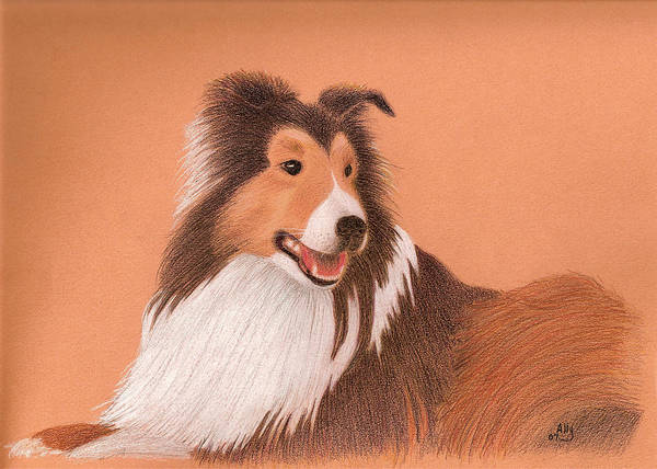 Sheltie Poster featuring the drawing Morgan by Ally Benbrook