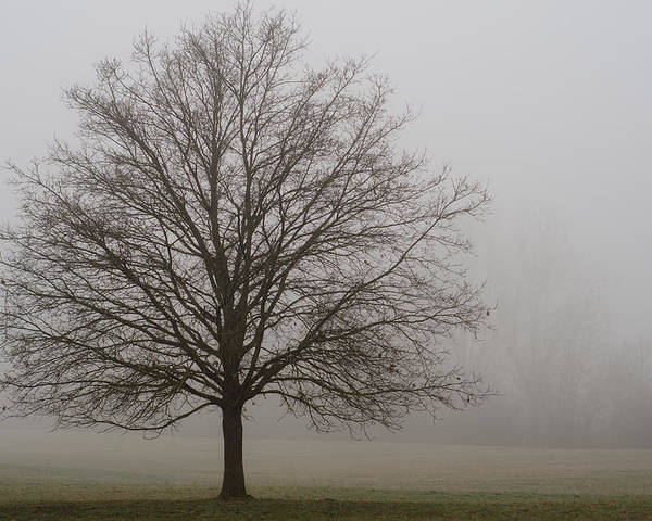 Winterpacht Poster featuring the photograph Morning Fog by Miguel Winterpacht