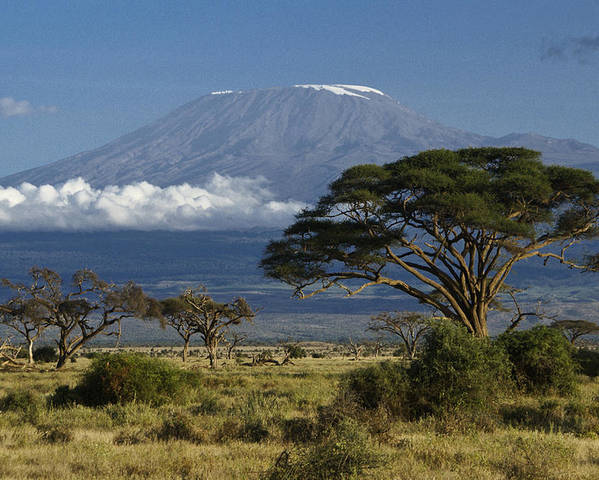 Africa Poster featuring the photograph Mount Kilimanjaro by Michele Burgess