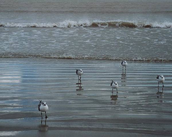 Birds Poster featuring the photograph Padre Island Shore Birds by Wendell Baggett