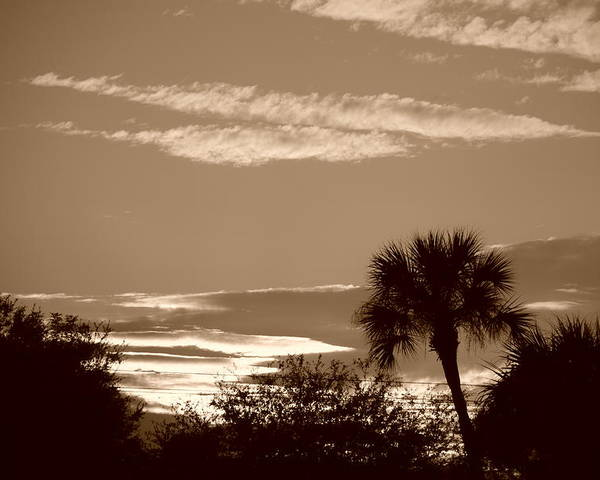 Sepia Poster featuring the photograph Palms In The Clouds by Rob Hans