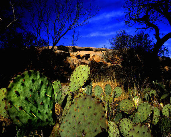 Landscapes Poster featuring the photograph Prickly Pears Enchanted Rock Texas by Tom Fant
