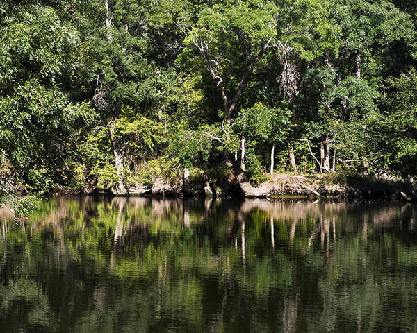 Landscape Poster featuring the photograph River In The Jungle by Radoslav Nedelchev