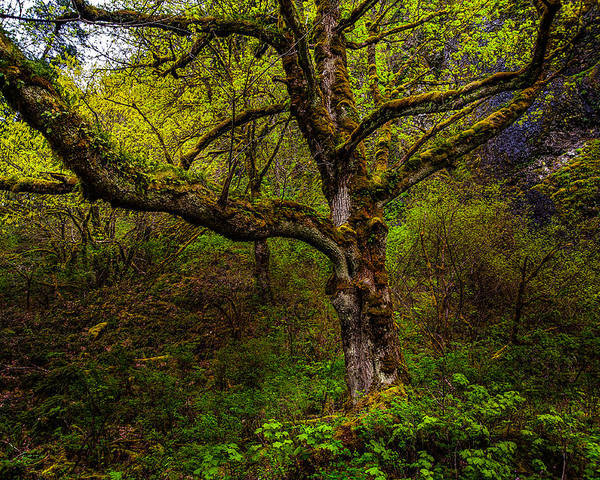 Tree Poster featuring the photograph Secluded Tree by Harry Spitz
