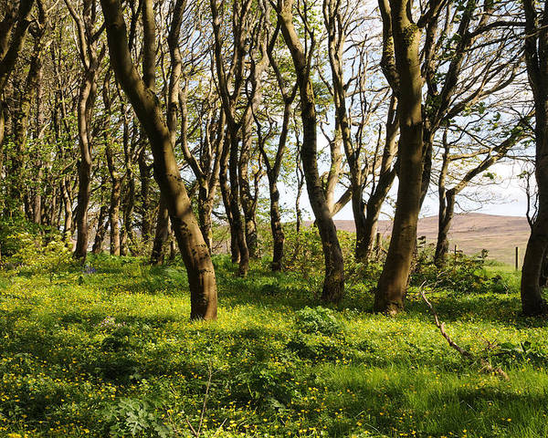 Landscape Poster featuring the photograph Shetland Woods by Terese Loeb Kreuzer