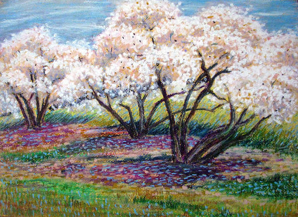 Oil Pastel Poster featuring the painting Spring Has Sprung by Art Nomad Sandra Hansen