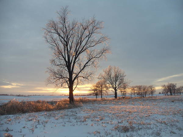 Landscape Poster featuring the photograph Sunset Over Icy Field by David Junod