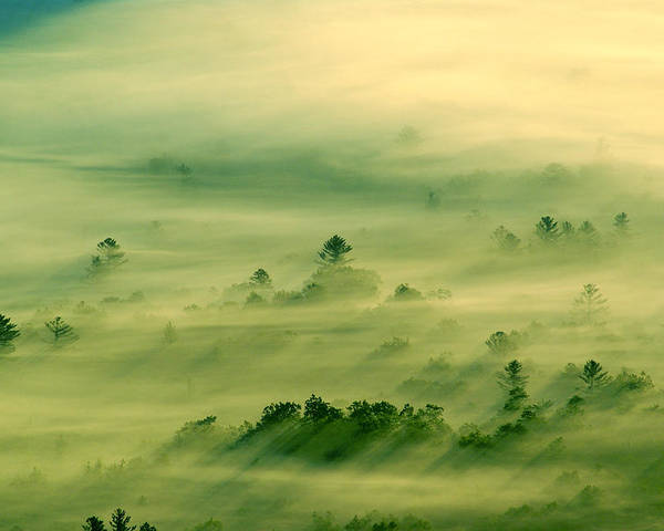 Landscape Poster featuring the photograph Trees Thru The Mist. by Itai Minovitz
