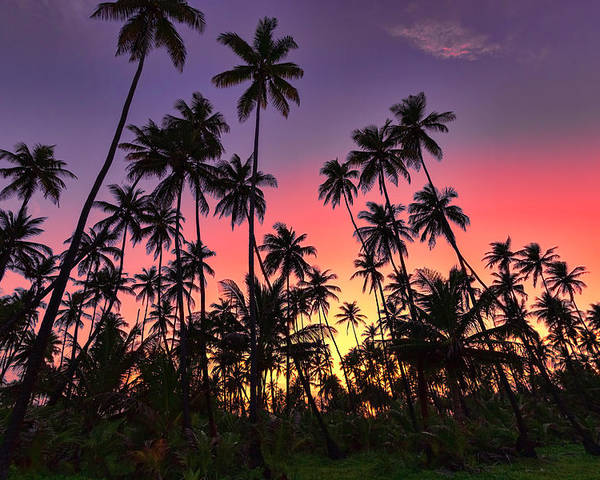 Sunset Poster featuring the photograph Tropical Sunset by Nadia Sanowar