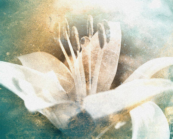 Lily Poster featuring the photograph White Lily by Lali Kacharava