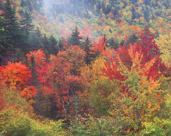 New Hampshire Poster featuring the photograph White Mountain Foliage by John Burk
