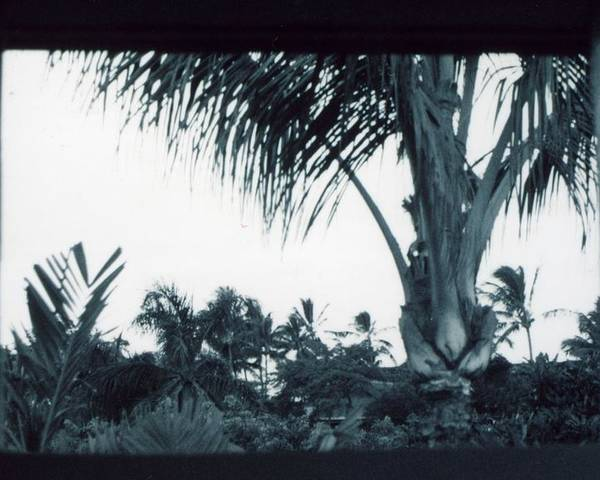 Palm Tree Poster featuring the photograph Window To Paradise by Jennifer Ott
