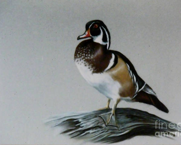 Duck Poster featuring the painting Woodie by Lynne Parker