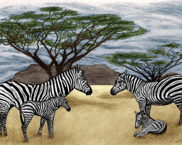 Zebra African Outback Poster featuring the drawing Zebra African Outback by Peter Piatt