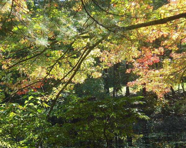 Landscape Tree Road Autumn Green Nature Poster featuring the photograph Autumn In Ma by Victoria Wang