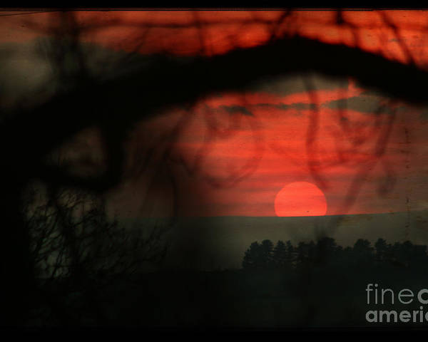 Sunset Poster featuring the photograph The Sunset by Angel Ciesniarska