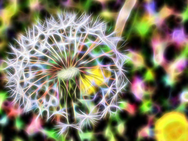 Flowers Poster featuring the photograph Dandelion by Michele Caporaso