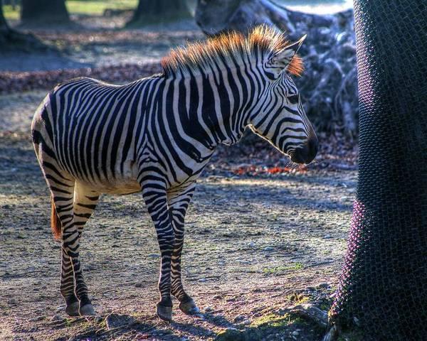 Hellabrunn Zoo - Munich Poster featuring the photograph Hellabrunn Zoo - Munich, Germany by Paul James Bannerman