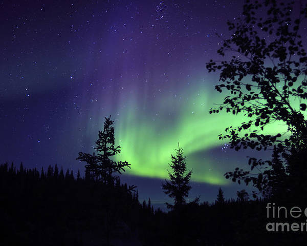 Yellowknife Poster featuring the photograph Aurora Borealis Above The Trees by Jiri Hermann