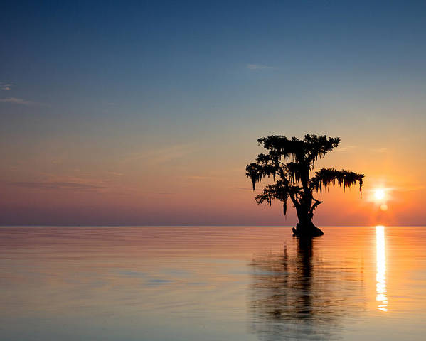 Bald Poster featuring the photograph Cypress Tree by Evgeny Vasenev