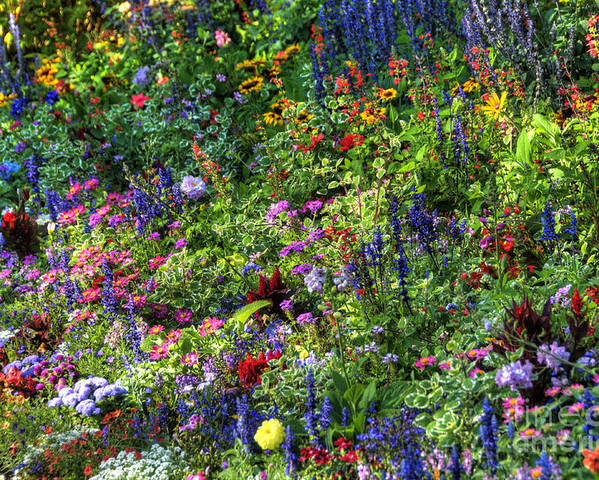 Landscape Poster featuring the photograph Flowers by Marc Bittan