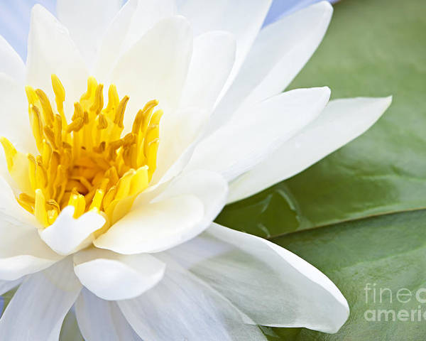 Lotus Poster featuring the photograph Lotus Flower by Elena Elisseeva