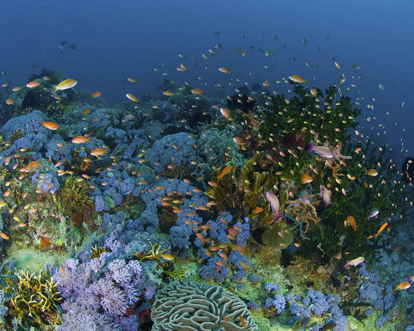 Fish Poster featuring the photograph Reef Scene With Coral And Fish by Mathieu Meur